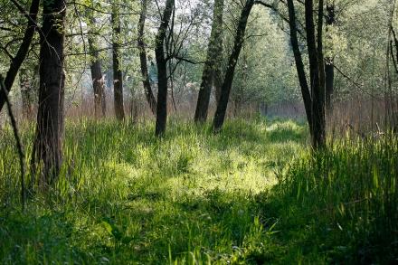 06pe01-2007.04.22-bei-entenlacke-a.schneider-44dddadd16145685daada02a3d8a8d9c