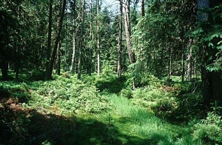 1fr04-torfmoosen-ueberwachsene-moorschlenke-a-land-ooe.-j.limberger-85321db182cf52718651e76877c79e5d