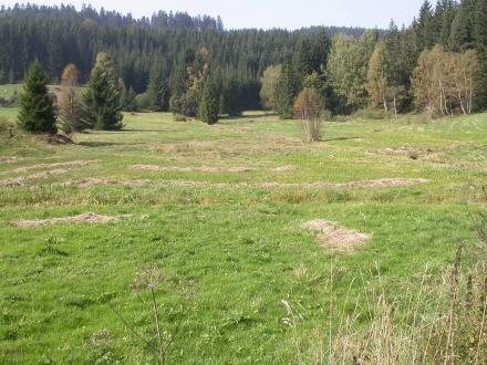 1fr06-2009.09.23-feuchtwiese-a-m.schwarz-1-f3752cf17ecb36dd91e856d2ee34bf76