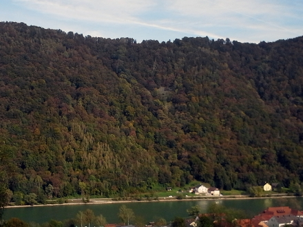 1ro03-2016.10.14-blick-auf-den-hangwald-a-m.schwarz-378db008b70c7bdae69f924ed0c7831c