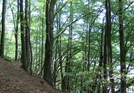 1ro11-2014.08.25-buchenwald-a-c.leitner-1-60d7c60375dabcf524123ea6ea2cf5eb