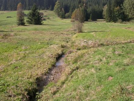 2fr06-2009.09.23-feuchtwiese-a-m.schwarz-3-1da7f791111051110391a265b9d496a1