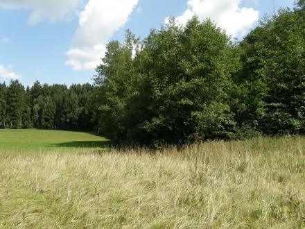 2gr02-2013.08.14-waldrand-und-feuchtwiese-a-c.leitner-2-d585c5634215bd301977c56e71bb8c47