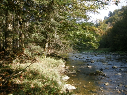 2gr05-2012.10.11-hangwald-und-aschach-a-c.leitner-1-46373aeba895610d7778b97332e3dd72
