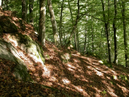 2ro06-2013.09.24-buchenwald-a-m.schwarz-1-8e506c24222dabd212f8c7bf6d9b1ab3