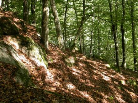 2ro06-2013.09.24-buchenwald-a-m.schwarz-1-ca3c3440eabe7e1193e5e961032e67c9