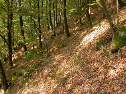 2ro09-2015.08.11-hangwald-a-m.schwarz-2-a1de73bcac53384881cb7da53330ccc4