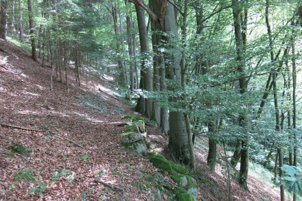 2ro11-2014.08.25-buchenwald-a-c.leitner-f559605188c3deee774dcf81a6afa4dc