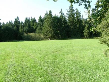2sd02-2012.09.11-waldwiese-a-c.leitner-372e4b7ede0bc2def3930fa3b43fe01d