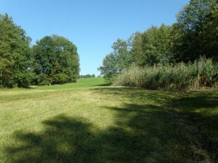 2sd07-2012.10.03-gemaehte-feuchtwiese-a-c.leitner-3-a8e024c48e52d26ac15cc3272fe6858b
