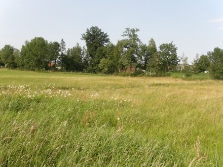 2sd12-2013.07.15-feuchtwiesen-a-c.leitner-1-43302bd9c6bd18b38f15b3e5a33cca30