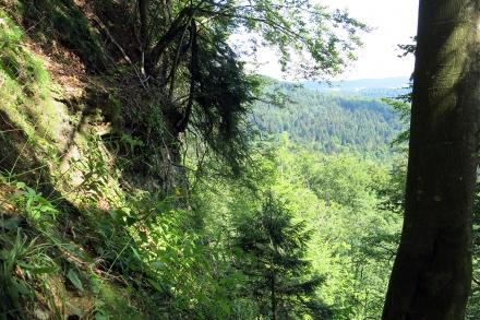 2vb02-2015.07.31-felswand-und-steiler-wald-a-c.leitner-f386b17e043d3cd4da704c232335aaed