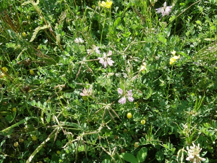 3ll04-2013.07.16-details-vegetation-a-c.leitner-4-4dc9a91953a5b588701047d835d7f4df