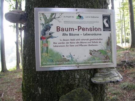 4vb02-2010.09.23-schild-baum-pension-a-m.schwarz-e42a87484744aace2ff78fffff533793