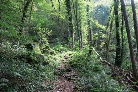 5ro03-2014.09.10-wanderweg-mittelhang-a-c.leitner-2-c260135a3229633ae3a2e626fe50638c