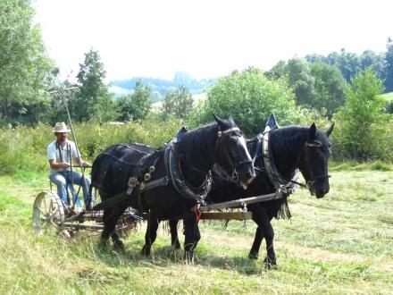 6gr01-2013.07.24-maehen-mit-pferden-a-w.ehmeier-3-3fcb1b25fddf982fe1b379b8e4298506