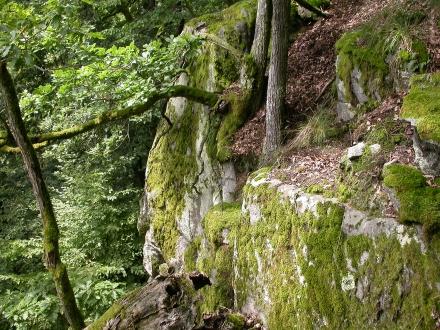 6ro08-2016.07.28-felsreicher-laubwald-a-m.schwarz-4c76a8dc77a794751186df11f9cada7a