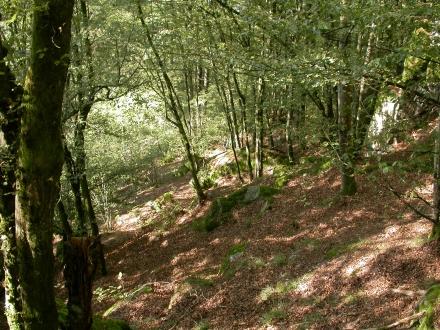 6ro12-2014.09.19-hangwald-mit-felsen-a-m.schwarz-3-5aa11748045101a3264a587f4b7d6747