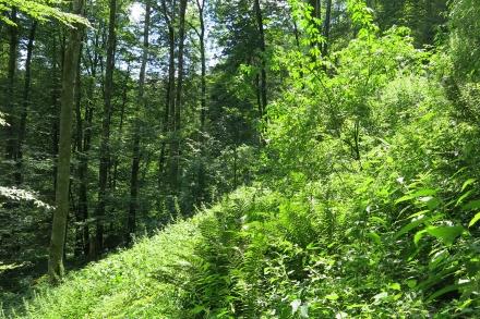 6vb02-2015.07.31-schluchtwald-a-c.leitner-2-3369746c947f908d64d9e1a4292ab99b