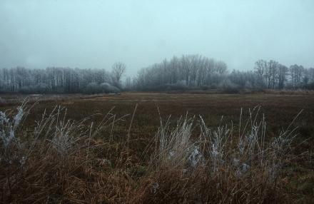 7kremsauen-morgenfrost-a-josef-limberger-0df761aafd95c255f065acffc0e70c8e