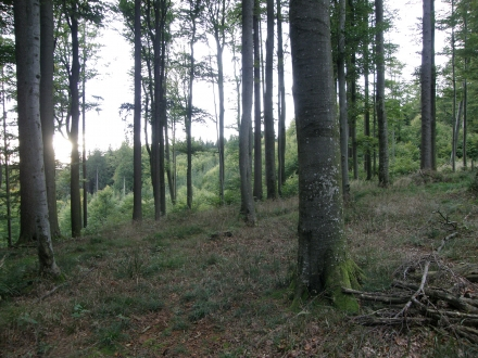 7vb02-2012.09.26-buchenwald-a-c.leitner-ab1dc85d5ae5e13660bd2f78878fd9ef