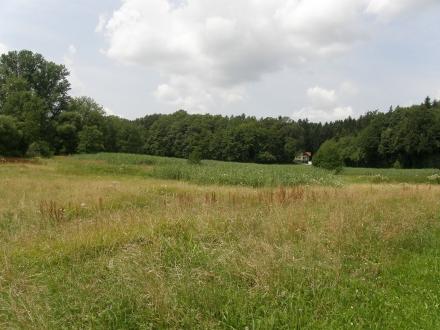 9sd06-2013.07.15-fruchtstaende-rumex-auf-maehflaeche-a-c.leitner-30acf1dfe21ffaf05575d5ecf8e5afb3