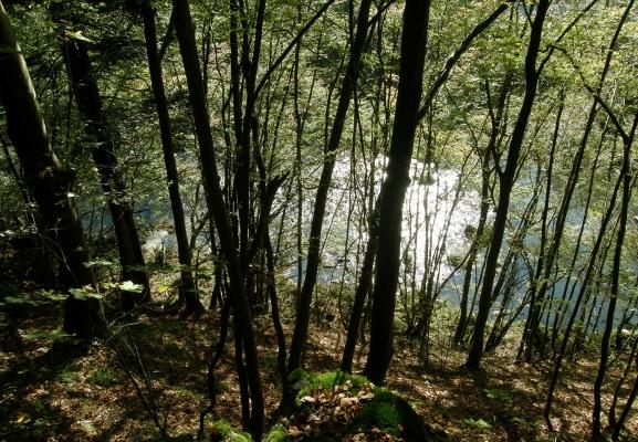 gr05-2012.10.11-hangwald-aschachtal-a-c.leitner-2-3c79c4dd35260893805a7ddb41f7adcb