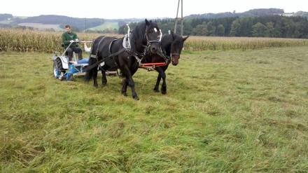 gr07-2014.10.21-mahd-mit-pferden-a-d.schmutzhart-1-55ad7670ee329d242bff3b246fc0d469