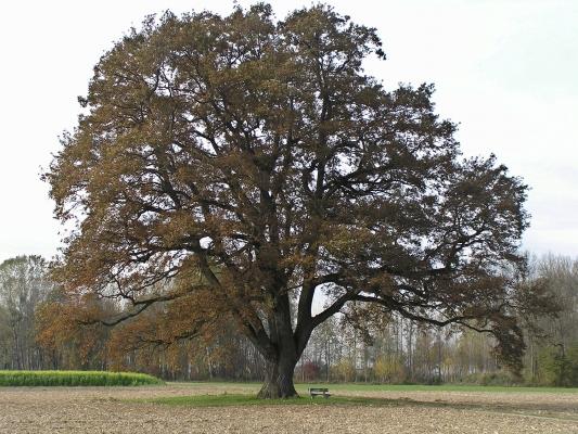 hecke-gehoelzgruppe-einzelbaum-a-josef-limberger-525fb292f2e96acad3c6e5b8a6abfe81