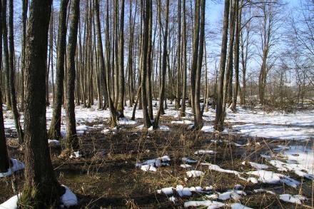 ki01-2013.03.06-feuchtwiese-und-uferbegleitgehoelz-im-winter-a-d.priller-2-7e3ce5094f2ce590aba86bb252427be4