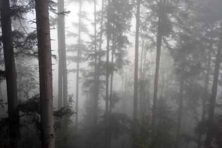 sd04-2017.10.16-hoellerwald-west-im-nebel-a-m.schwarz-3-71e6111050d6f98020ea3fd743627743